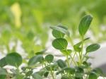 Urban Gardening im Hagelkreuz: Der Garten als Treffpunkt