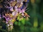 Pressemitteilung - Umwelt- und Ehrenamt Preis die Bienen Medaille