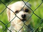 Kempen erhöht die Hundesteuer